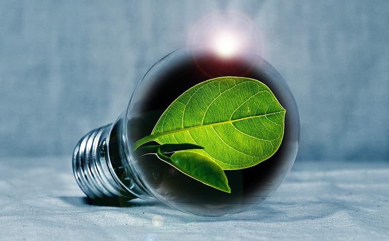 Biomass Green Energy